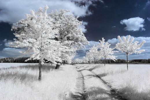 Uckermark, Infrarot, Holger Nimtz, Infrared, Fotografie, Allee, Bäume, Türkshof, Photography, Infrarotaufnahme, IR,