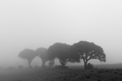 CRUZ DE LOS REYES, fineart, dekorativ, wallart, El Hierro, Canary Islands, Kanarische Inseln, Kanaren, Holger Nimtz, Nebel, foggy, misty,