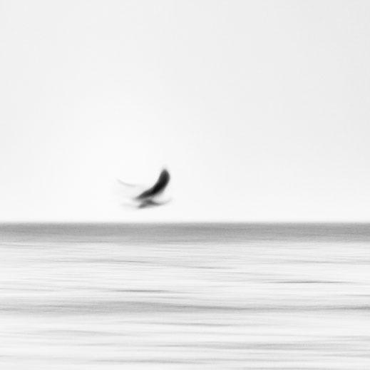 seagull, abstract, Baltic Sea, Ostsee, schwarz-weiß, Minimalismus, minimalism, minimalist, minimalistisch, Holger Nimtz, Wandbild, Kunst, Fotokunst,
