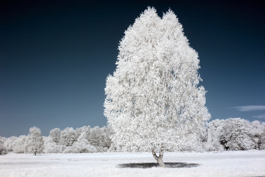 lonely tree, Berlin, Infrarot, Holger Nimtz, Infrared, Fotografie, Baum, tree, Photography, Infrarotaufnahme, IR,