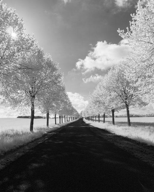 Infrarotfotografie, Berlin, Spreepark, Riesenrad, Plänterwald, Infrarot, Holger Nimtz, Infrared, Fotografie, Photography, Infrarotaufnahme, Fotokunst, Wood-Effekt,