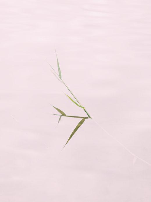Stiepensee, Minimalismus, Fotografie, Spiegelung, See, photography, moderne, Fotokunst, minimalism, minimalist, minimalistisch, Holger Nimtz, Kunst, fine art, Uckermark,