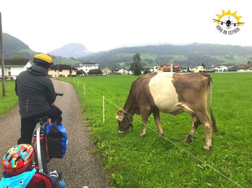 Auch im Regen kann während der Radreise die Kuh beobachtet werden.