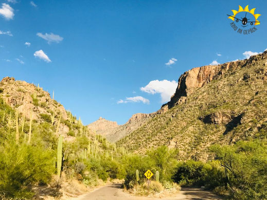 Sabino Canyon in Tucson / Arizona.