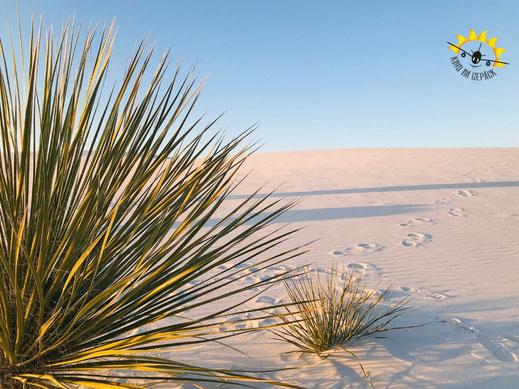 Kakteen und Pflanzen im White Sands NM.
