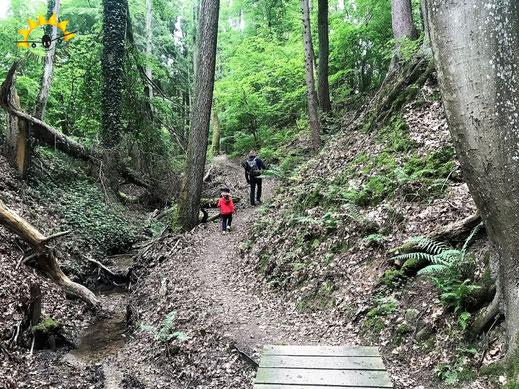 Schmale Pfade führen durch die Klingenbachschlucht am Bodensee.