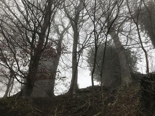 Sehr hohe Mauern bilden die Überreste der Burgruine Homburg.