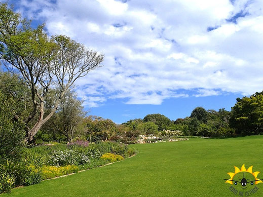 Im Kirstenbosch Botanical Garden.