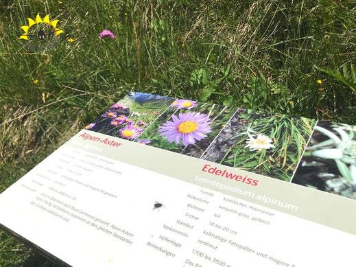 Info-Tafel auf dem Pflanzenpfad in Samnaun.