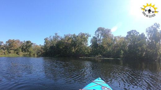 Kajaken oder schwimmen im Wekiva State park.