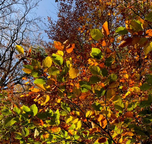 Photo: Natur Schule See Land