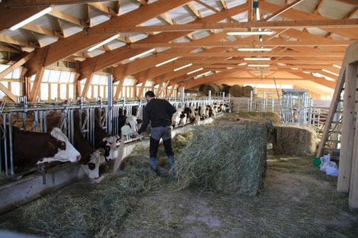 Stabulation à logettes pour le troupeau Abondance