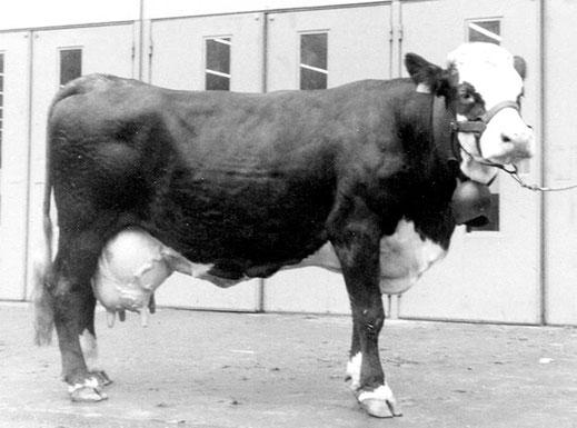 FLORIDE, née en 1977, fille de Quinquet, est la première Abondance à avoir atteint 90 000 kg de lait
