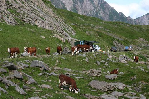 Traite dans les Pyrénées