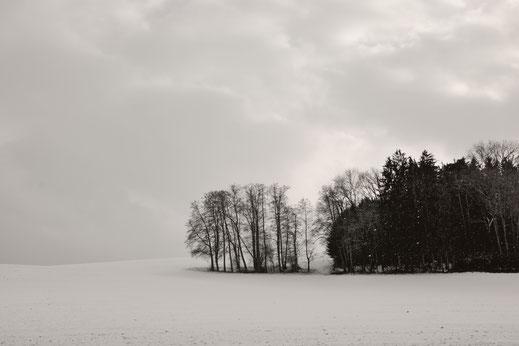 Wayside   © Lena Weisbek