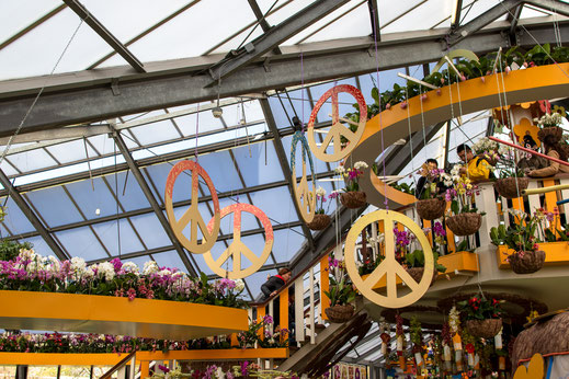 Peace and love Orchideen Keukenhof Virginie Varon