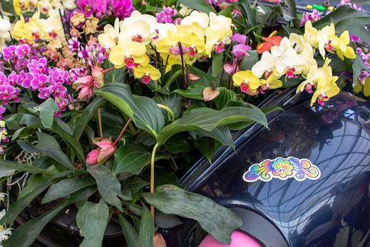 Orchideen Keukenhof Virginie Varon