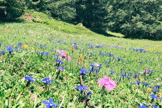 Moorlandschap op de Furnerberg © Prezis GmbH