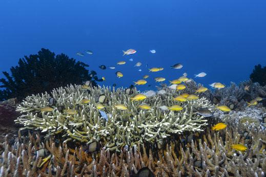 Reef Scenics
