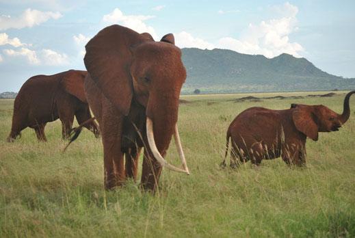 Kenya, Tsavo East