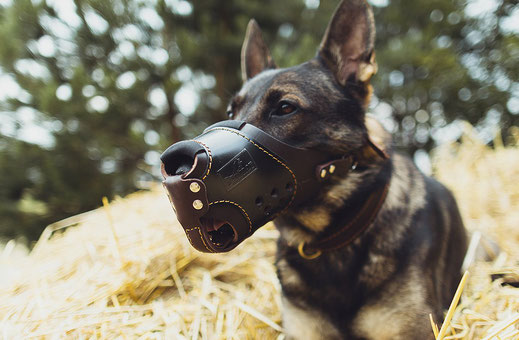 Dog Muzzle - WORKING DOG