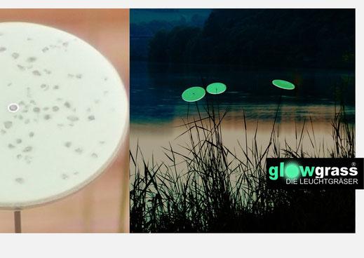 GLOWGRASS - die Leuchtgräser
