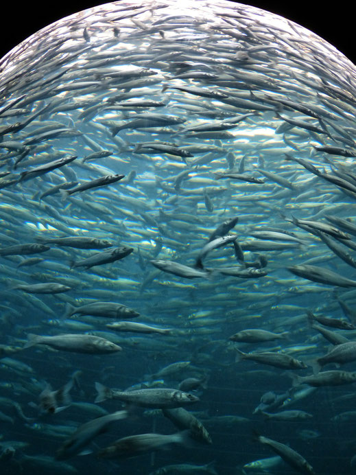 Omega 3 in Fisch? - vegansports fit & healthy