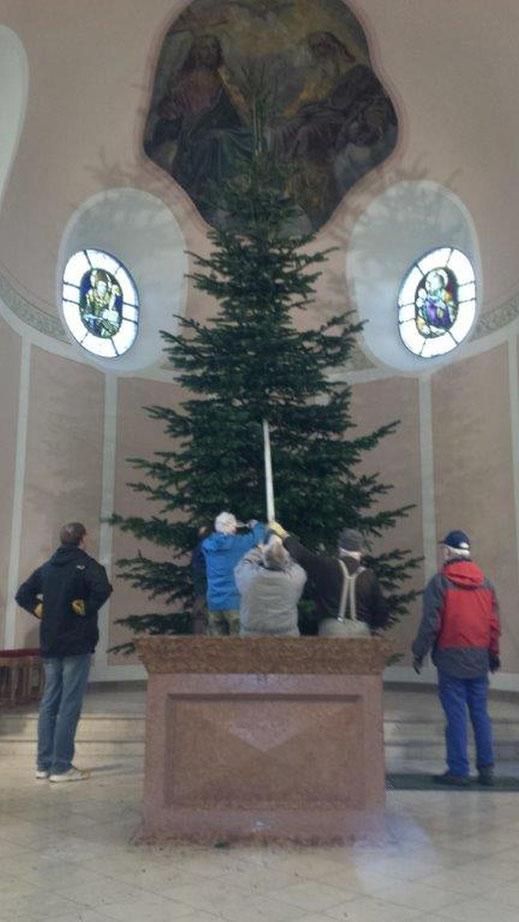Es ist geschafft: der Baum wird im Altarraum aufgerichtet.