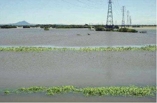 台風後の越流で湖のようになった渡良瀬遊水地の画像