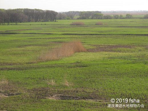 画像:2019/04/20 大地の新緑