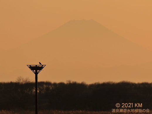 画像:2021/01/04 夕焼けの富士山とカラス