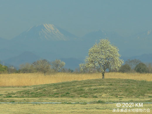 画像:2021/03/16 ハクモクレンと男体山