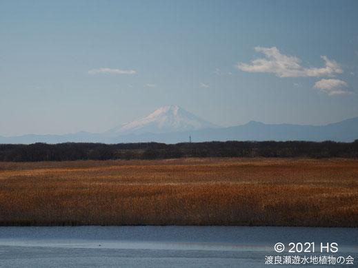 画像:2021/01/01 桜堤から白富士