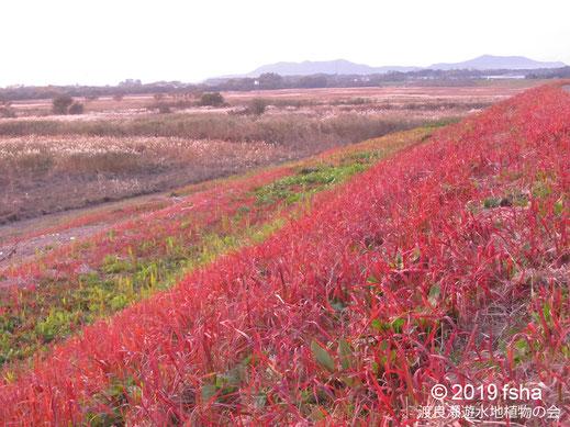 画像:2019/11/16 草紅葉のオギ原
