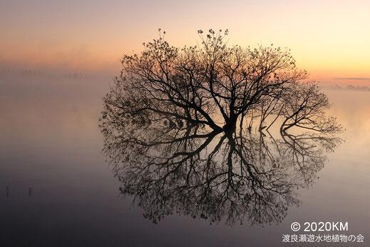 画像:2010/12/06 谷中湖の夜明け