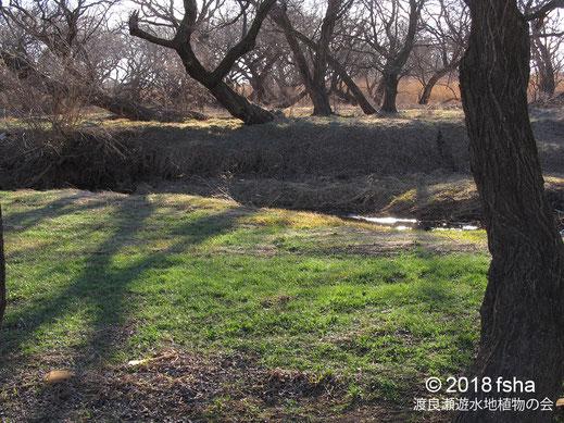 画像:2018/02/17 第3調節池内の水路際