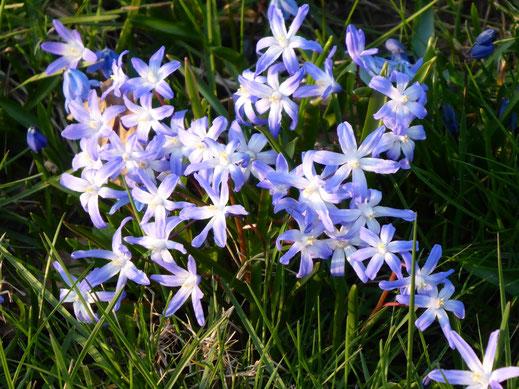 Kleine Blumen am Wegesrand - Bildquelle: Julia Heimann