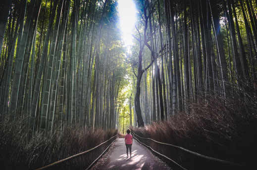 Arashiyama Bambuswald Kyoto