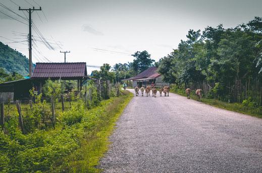 Fahrradtour Vang Vieng Loop