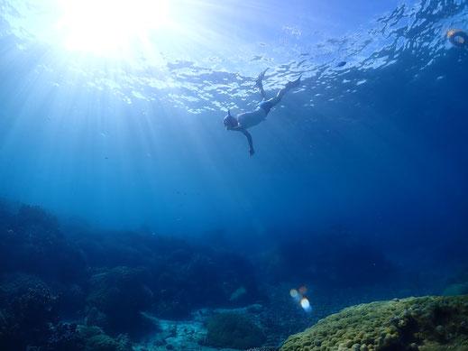 宮古島シュノーケル・シュノーケリング、ウミガメシュノーケリング、スキンダイビング、素潜り、バルーンフィッシュ宮古島ツアー写真