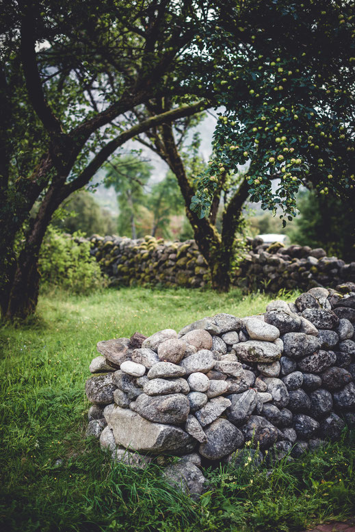 a stone wall in front of an apple tree