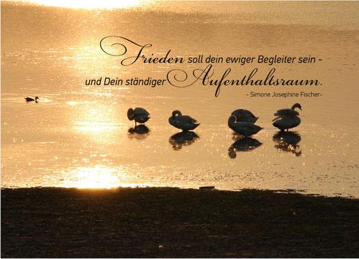 Lichtgarten Licht-Garten Kerzen Teelichter Simone Fischer Postkarte Postkarten Bücher Pflanzen Blüten
