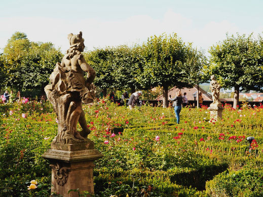 The garden with roses and statues
