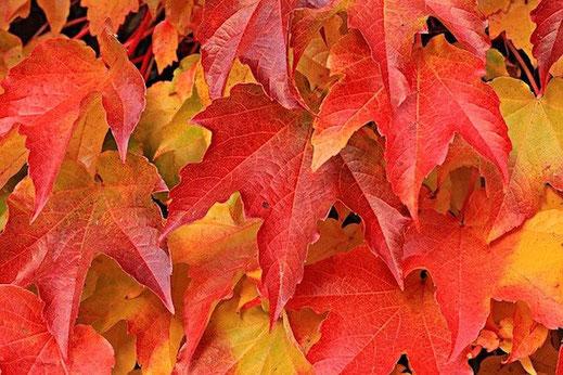 Bunte Blätter richtig trocknen als Aktivität für Teenager