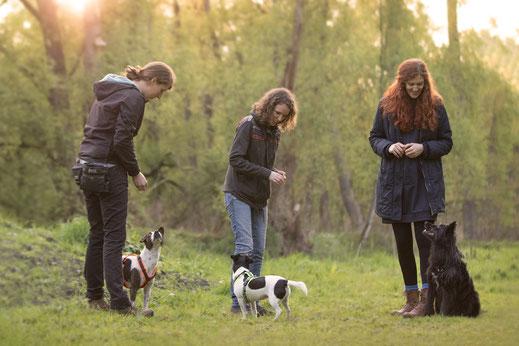 Regelmäßig stattfindendes Gruppentraining Hunde Hundeschule Hundetraining Duisburg Straelen Niederrhein Ruhrgebiet Social Walk Spaziegänge Beschäftigung