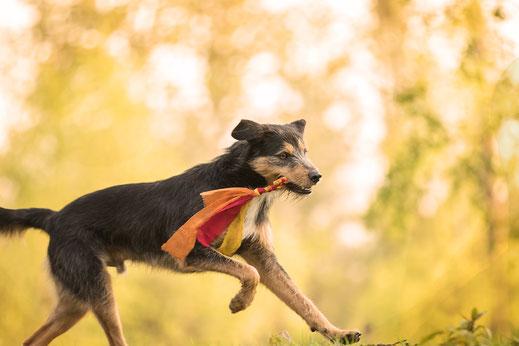 Für jeden Wildling das passende Angebot Hundeschule Niederrhein Straelen Herongen