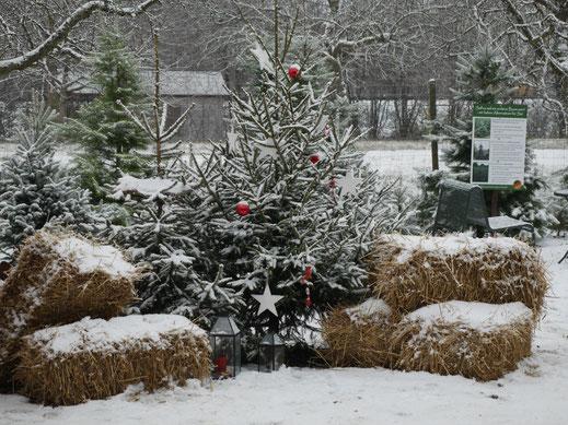 Weihnachtsbaum Kaufen Karlsruhe.Herzlich Willkommen Christbaumhof Frank