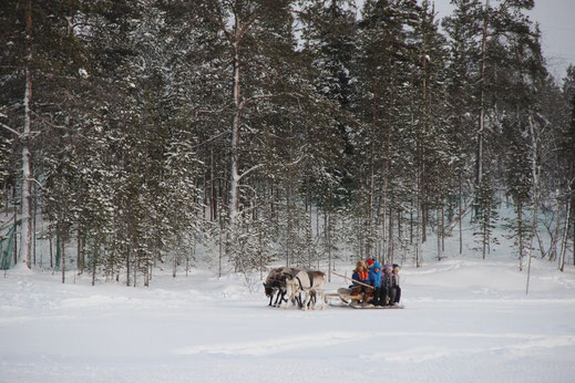 Reindeer Sledge Tour (Northern Lights Explorer)