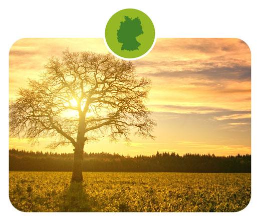 Gewürze; Gewürzmischungen; Deutschland; Heimat; Heimatküche