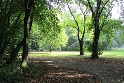 forest walking ist gut für die Seele